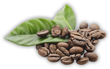 bean-leaf